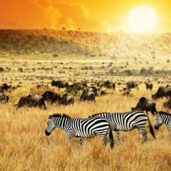 Tips and Tricks for Visiting Africa