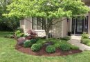 What Type of Grass Should You Plant in Your Yard?