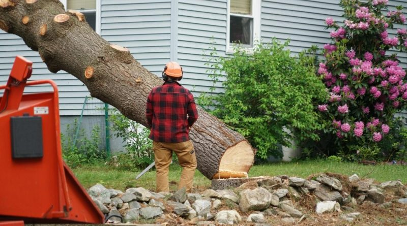 Image result for Signs For Tree Removal