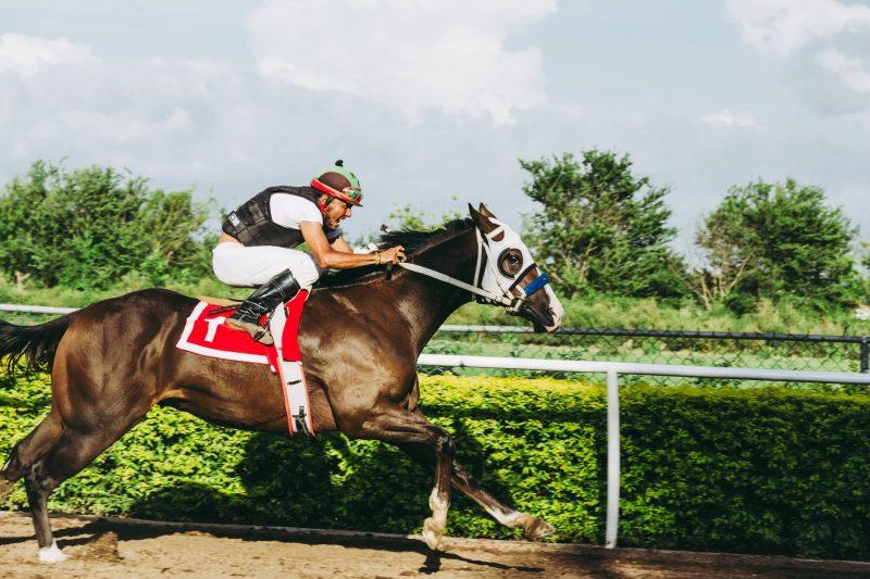 horse betting odds basics