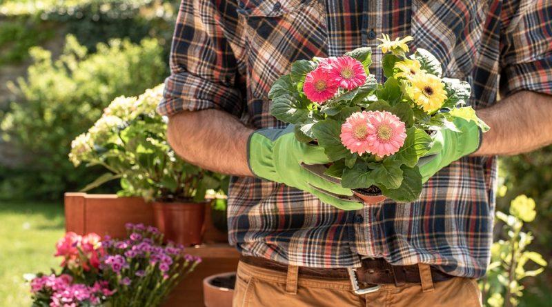 Top 5 Simple Secrets for a Pest-Free Garden