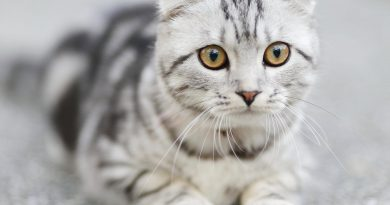 Behavioral Changes in Cats to Track