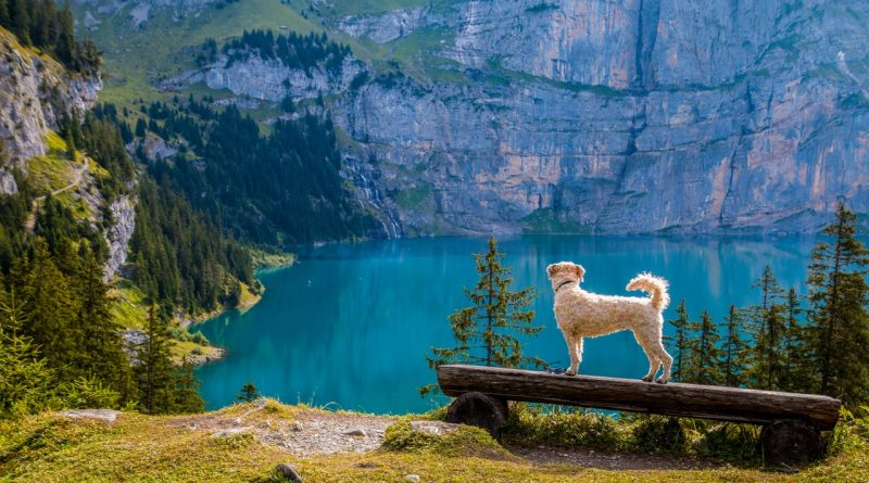 How to Choose the Right Travel Crate for Your Dog